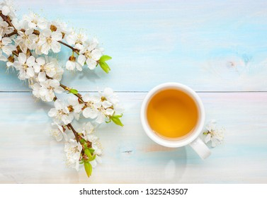 Cup of tea and branches of blossoming apricot on old light blue wooden table.