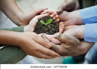 Cupped hands holding a new plant in soil