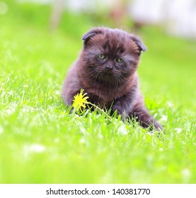 Cure kitten sitting near flower outdoors summer green background