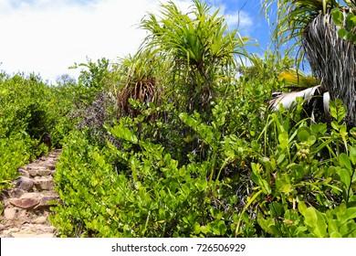 Curieuse island coastal trail to Anse St. Jose beach. Wild nature of Seychelles islands