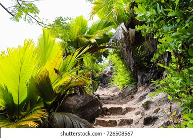 Curieuse island coastal trail to Anse St. Jose beach. Wild nature of Seychelles islands