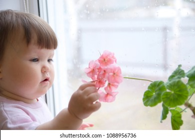curiosity childness. curious baby girl portrait in pink clothes one year old on the window with geranium flower. inquisitive child at home at rainy day