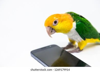 A curious bird is listening to music coming out of a cellphone