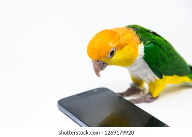 A curious bird is looking into a cellphone