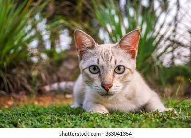 Cat In Backyard cat in backyard images, stock photos & vectors | shutterstock