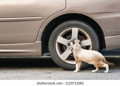 Curious cat checking out a car tyre