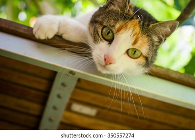 Curious cat looking down from a bench