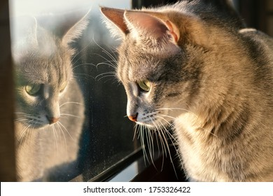Curious cat looks out the window. A gray cat is sitting by the window. Reflection of a cat in a glass. World Pet Day.