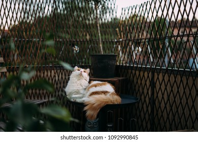 Curious cat lying on table on a balcony