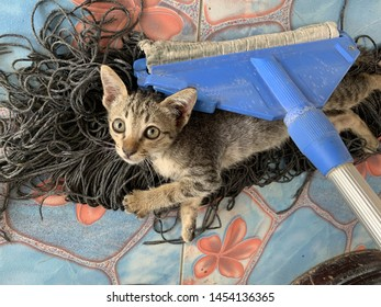 Cat Cleaning the House Images, Stock Photos & Vectors | Shutterstock