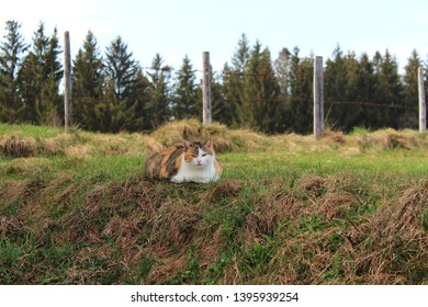 curious cat on a meadow, agriculture fence in the background