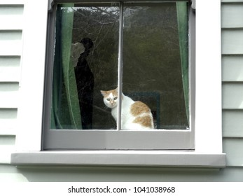 Curious cat peering out of old house window, Wellington New Zealand