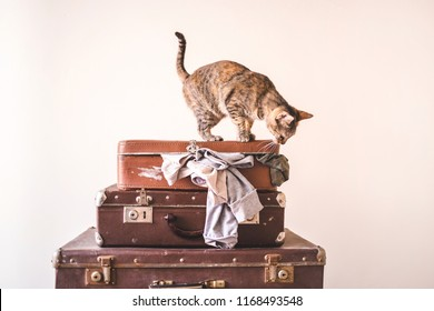 Curious Cat sits on vintage suitcases against the backdrop of a light wall. Rustic Retro Style Copy space