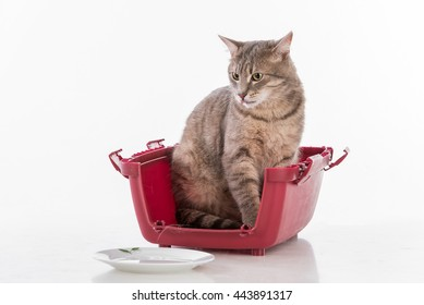 Curious Cat Sitting in the Box. Plate of Water.