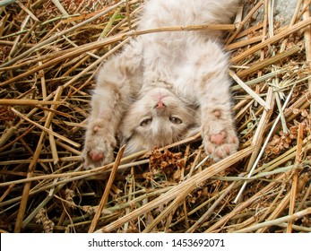 Curious cat in village. Cat and countryside. Portrait of a cat on the farm in the hay