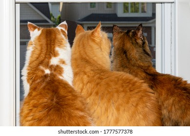Curious cats carefully watch from the window how the birds nest under the roof