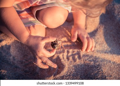 Curious child toddler playing on beach with hermit crab during summer vacation concept childhood curiosity lifestyle