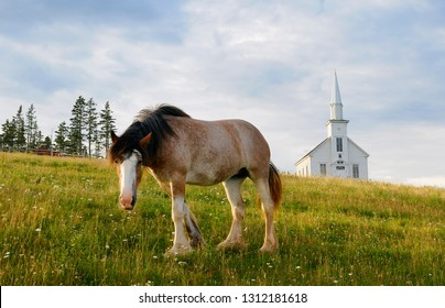 Curious Clydesdale horse and church at Highland Village Museum at Iona Cape Breton
