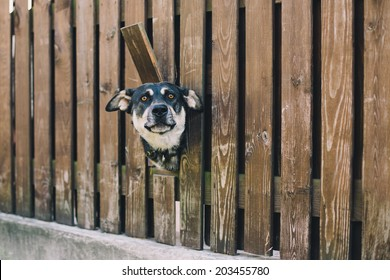 Curious dog looking from the hole in the fence