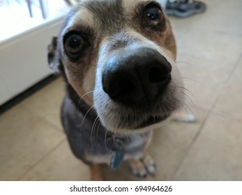 Curious dog sniffing the camera