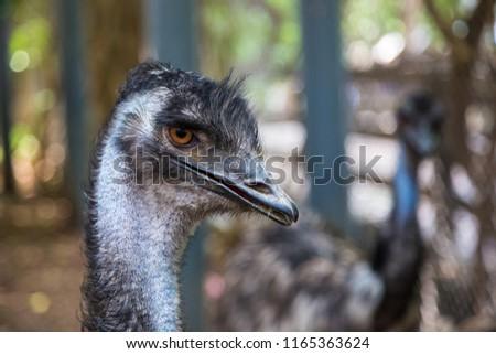 Emu Sound Video