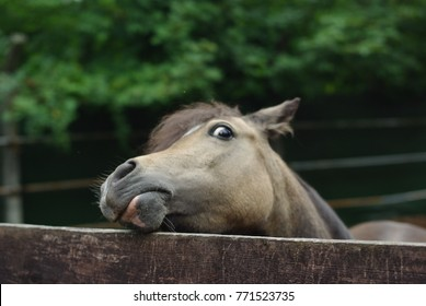 Curious and funny horse
