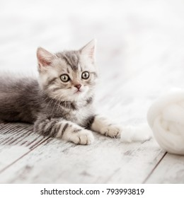 Curious gray kitten. Little cat at home. Small pet