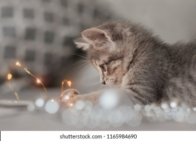 Curious gray kitten sitting on a bed and staring at a garland with a bokeh background of Christmas lights, the concept of the New Year and Christmas