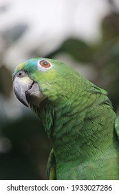 Curious green parrot posing for the linse