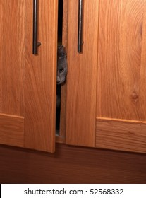 A curious grey kitten poking his head out of a cupboard door as if he is spying.