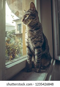 Curious grey tabby European cat sitting indoor on the window sill and looking outside.