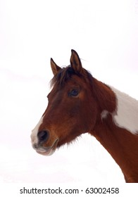 Curious horse isolated on background