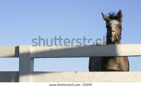 Curious horse in Kentucky.