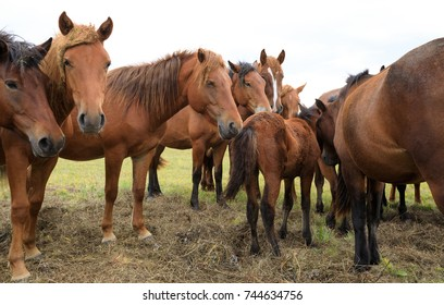 curious horses looking at camera on the grassland