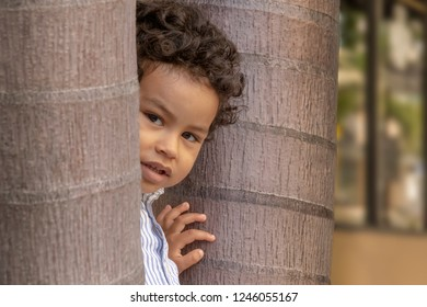 A curious little boy peeks at the camera while in between two trees. Out on the street sidewalk, an inquisitive boy hides behind trees while he looks at the camera.