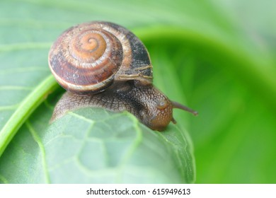 Curious little snail in the garden on green leaf