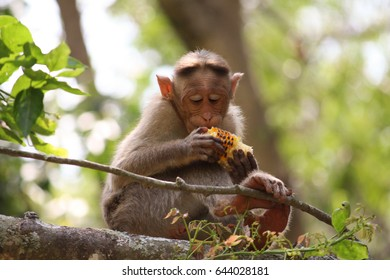 curious monkey is eating