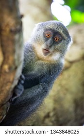 Curious monkey look from behind a tree in the forest