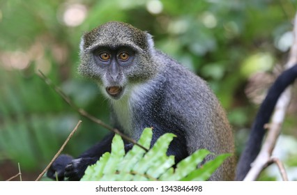 curious monkey look from tree in jungle