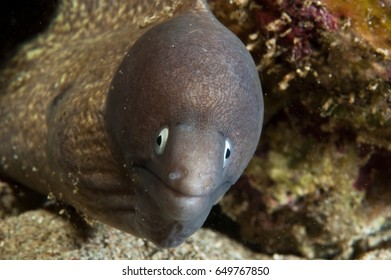 Curious moray eel appears to be smiling