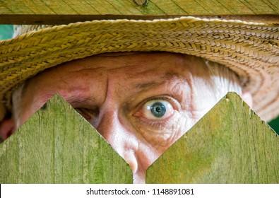 a curious neighbor looks over a garden fence