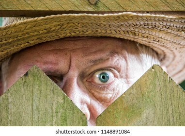 a curious neighbor looks over a garden fence