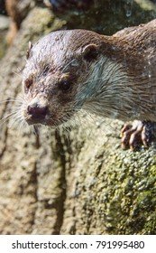 a curious otter who came to see the visitors