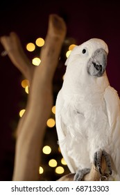 Curious parrot over Christmas blurry tree.