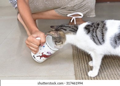 Curious Pet cat looking inside the porcelain cup held by a teenage girl. Funny animal.