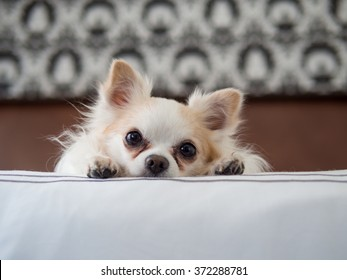 Curious puppy laying on white bed looking forward, retro boho background