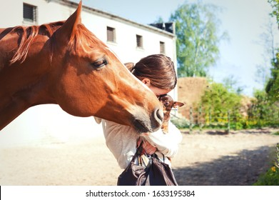 Curious red horse reaching to small dog with cheerful teenage girl. Vibrant colored outdoors horizontal image with filter.