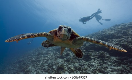 Curious Sea Turtle