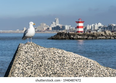 Curious seagull on concrete block with Scheveningen harbor on the background on a sunny day in February