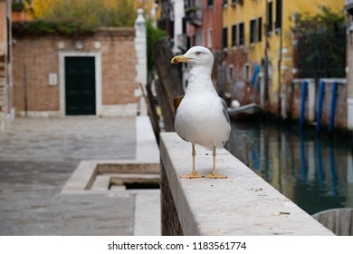A curious seagull sits on a wall next to a canal on a street in Venice, Italy.